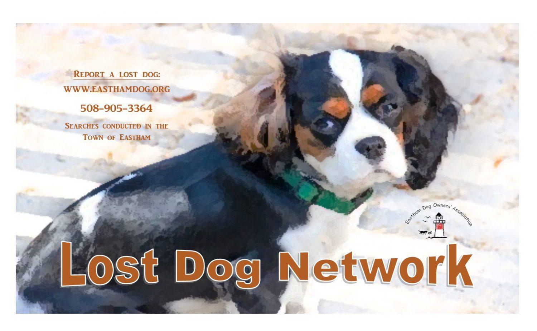 Lost Dog 2017